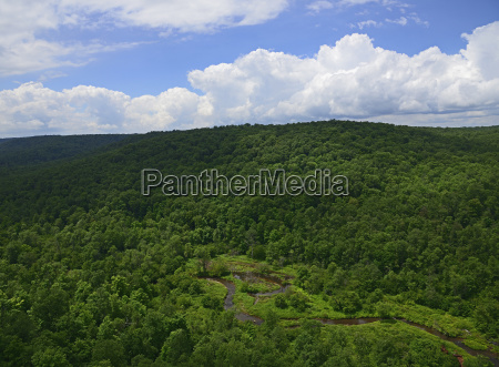 usa pennsylvania allegheny national forest with