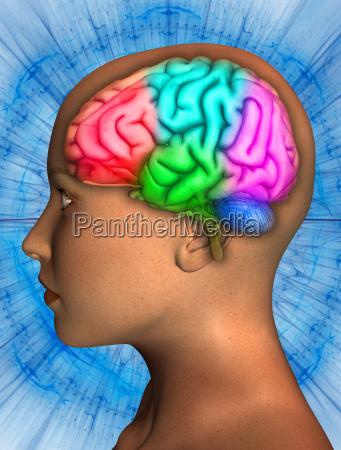 profil kontemplation anatomie klar anschaulich augenfaellig