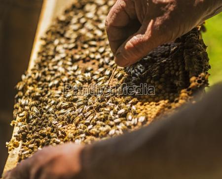 makro grossaufnahme macro makroaufnahme macroaufnahme landwirtschaft