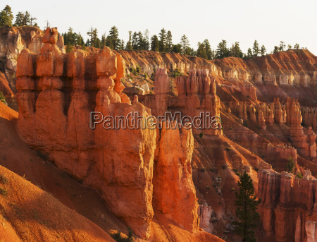 baum nationalpark usa sonnenlicht horizontal outdoor