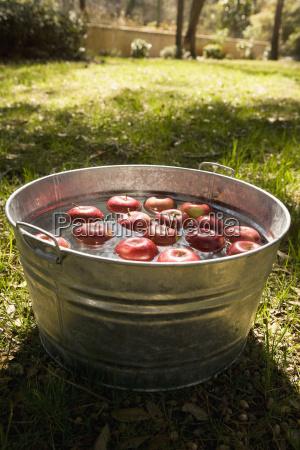 aepfel in eimer mit wasser