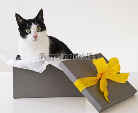 haustiere horizontal geschenk waagerecht boxen schachteln