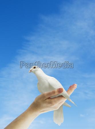 hand holding dove