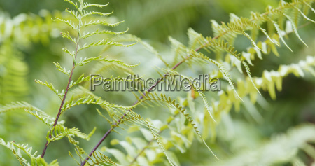 green fern plant close up