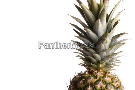 die ananas ist eine tropische obstpflanze