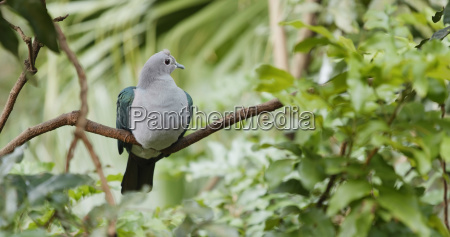 grey bird with green wing on