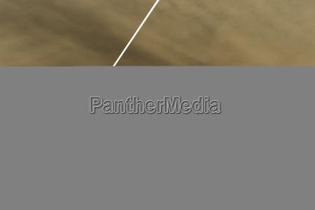 low angle view of single bird