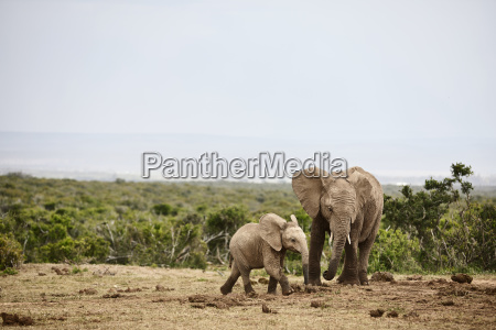 suedafrika ostern kap addo elephant nationalpark