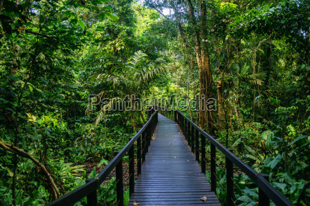 costa rica limon wooden pathway in