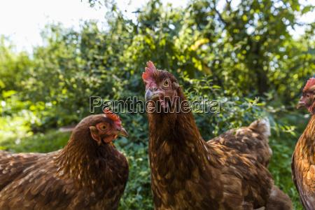 tier vogel landwirtschaft ackerbau freiheit ungebundenheit
