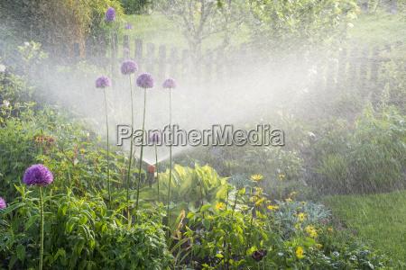 bewaesserung im blumengarten