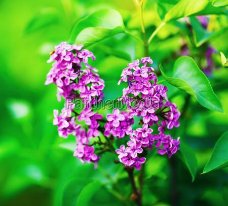 blume pflanze gewaechs bluete erbluehen bluehen