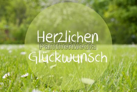 gras meadow daisy flowers herzlichen glueckwunsch