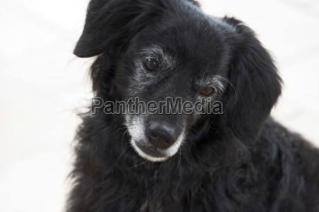 kleiner schwarzer hund schaut traurig