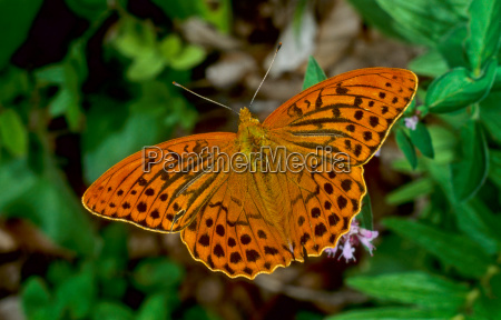 orange closeup animal insect insects fauna