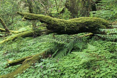 urwald auf der insel gomera