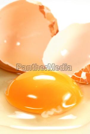 eigelb frisches aufgeschlagenes ei