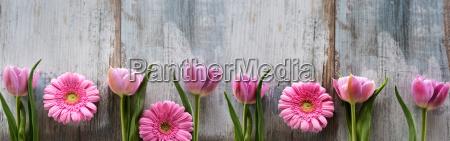 spring flowers on shabby wood