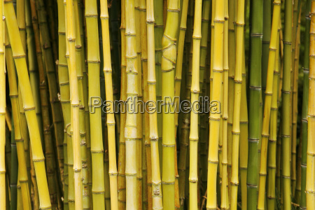 detail of a bamboo forest with