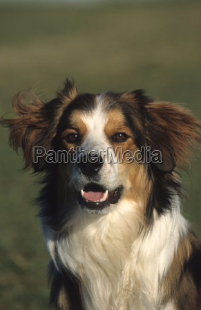 mixed dog portrait