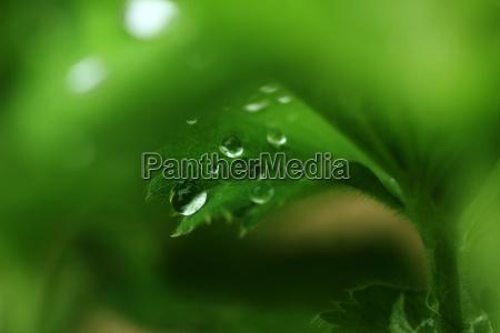 wassertropfen auf gartenpflanzen