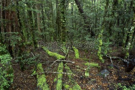 regenwald sudinsel neuseeland