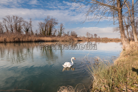 tranquil scene of lake with swan