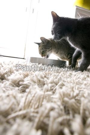 zwei katzen spielen mit einer uhr