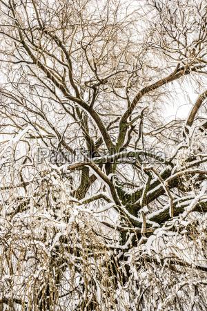 baum winter kalt kaelte aeste zweige