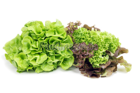 types of lettuce on a white
