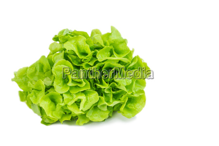 green lettuce ready for use