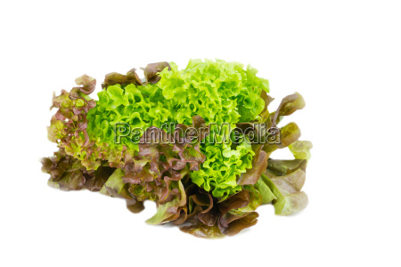 closeup of home grown curly lettuce