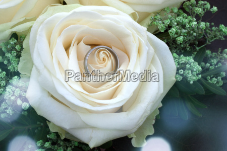 white rose with wedding ring