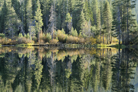 spiegelung am ufer des salmon lake