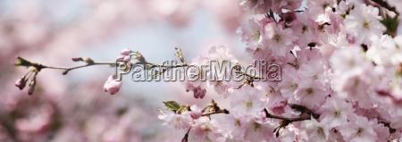 blueten fruehling sonne himmel banner