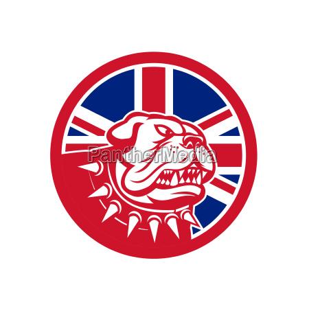 britisch bulldogge bulldog ikone britische briten