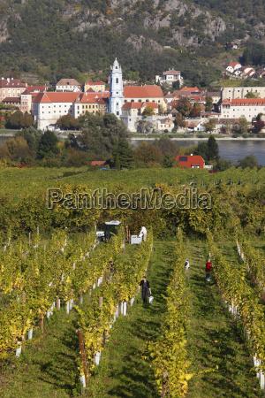 durnstein view over vineyards at rossatz