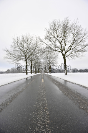 snow and ice covered tree avenue