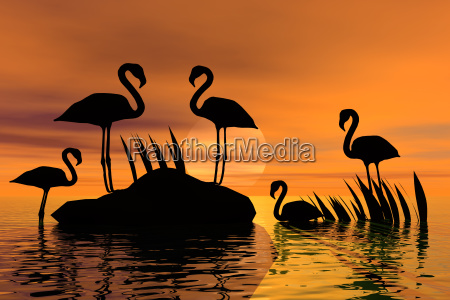 graphic animal bird fauna sunset animals
