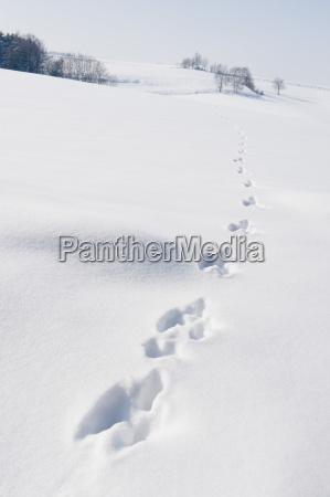 hasenspuren in verschneiter winterlandschaft landshut