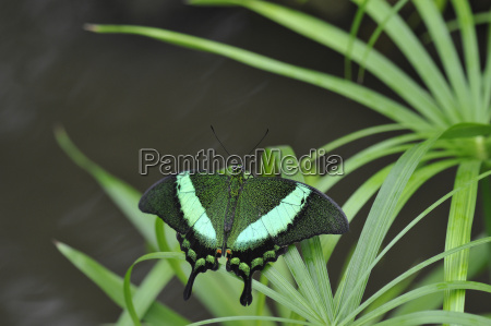 leaf animal insect insects green fauna