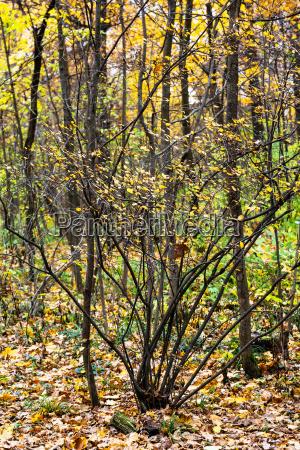 blatt baumblatt stadt baum park garten
