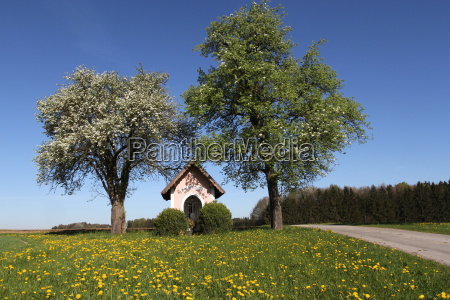 chapel under blooming pear trees pyrus