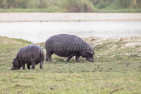 fodder animal fauna national park africa