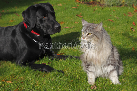 hund und katze im garten