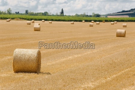agricultural field with bales