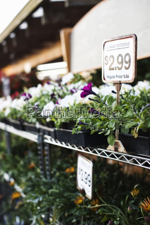 garden centre nursery plants with