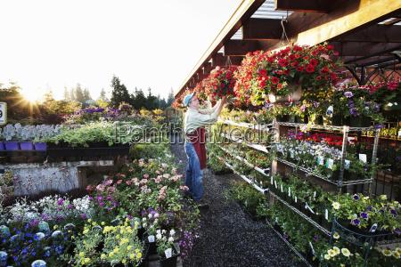 nursery employee watering plants in the