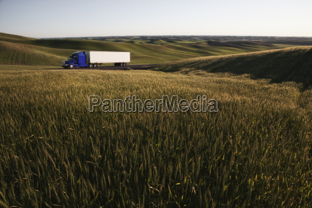 commercial truck driving though wheat fields