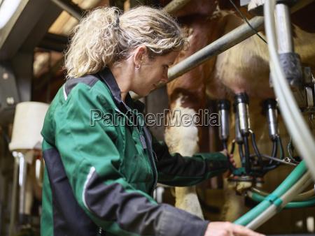 weiblicher landwirt im stall der eine
